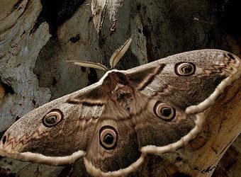Miembros del Instituto Alavés de la Naturaleza y de la Asociación de Amigos del Jardín realizan un muestreo de mariposas nocturnas